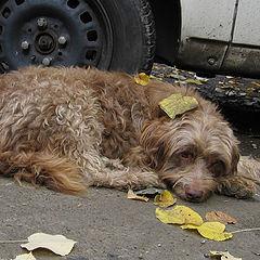 "photo ""Sad dog"""