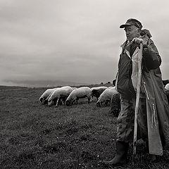 "фото ""SHEPHERD"""
