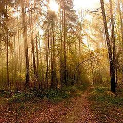 """фото """"Утро в лесу."""""""