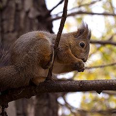 """фото """"Обед с орешками"""""""