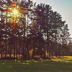 "фото ""pinery"""