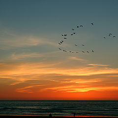 "photo ""Flying Over Sunset"""