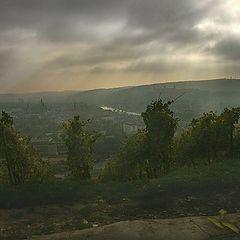 "фото ""Вид на город с виноградника. Вюрцбург."""