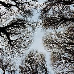 "photo ""Revenge of Trees"""