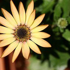 "фото ""One little flower to my friend Sofia"""