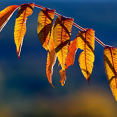 "фото ""Осенний свет"""
