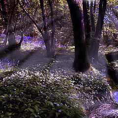 "photo ""A Bluebell Wood In England"""