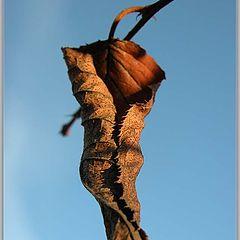 """photo """"Last leaf"""""""