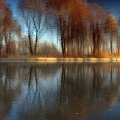 """photo """"Mystical wood."""""""