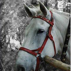 """фото """"Портрет лошади"""""""