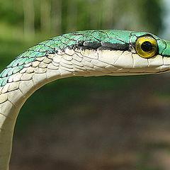 "photo ""Snake"""