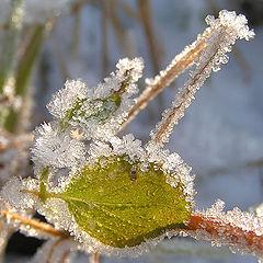 "photo ""Snow sugar candy"""