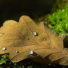 """album """"Forest"""""""