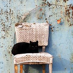 """photo """"Portrait of a cat"""""""