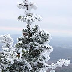 """фото """"winter #01"""""""