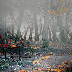 "фото ""Foggy day in the Park"""