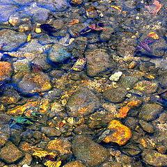 """photo """"River Stones"""""""