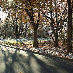 "photo ""The sun light penetration into the MSU (Uni) campus park."""