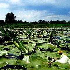 "photo ""Green River"""