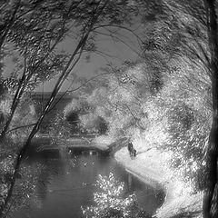 "photo ""BW autumn"""