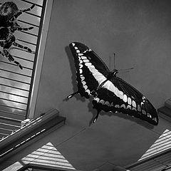 """фото """"Butterfly Beware"""""""