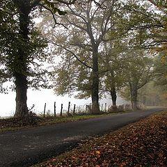 "фото ""autumnal colours"""