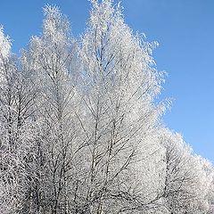 "photo ""Winter fairy tale"""