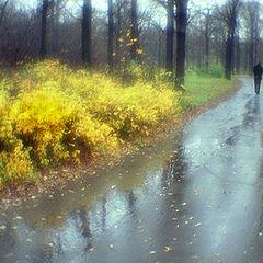"photo ""Leaving autumn"""