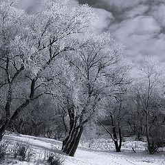 "фото ""White phenomena"""