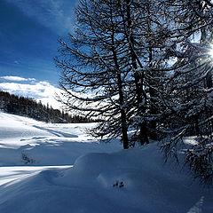 """фото """"Mountain"""""""