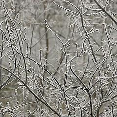 """album """"Winter 2005/2006"""""""