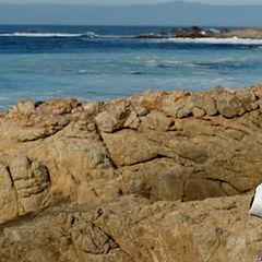 "photo ""Sea Gull Territory"""