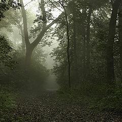 """photo """"Wood road..."""""""