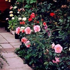 """фото """"You Didn't Promise Me A Rose Garden"""""""""""