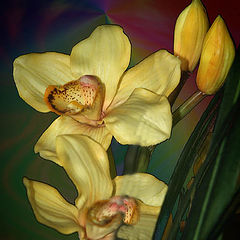 "фото ""Yellow Orchid"""