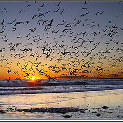"photo ""Sunset Fever"""