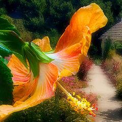 "фото ""Garden"""