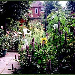 "фото """"Summer Garden"""""