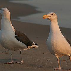 """фото """"2 seagulls"""""""