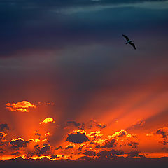 "photo ""Flying at  sunset"""