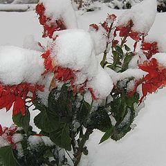 "photo ""Unexpected winter"""
