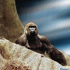 "photo ""My King Kong3"""