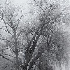 """фото """"Туманный день"""""""