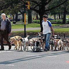 "фото ""Dog walker"""