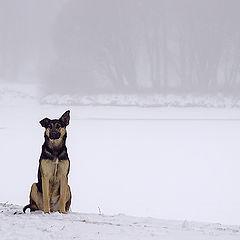 """фото """"Собачье одиночество"""""""