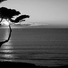 "photo ""Black&White Sunset"""