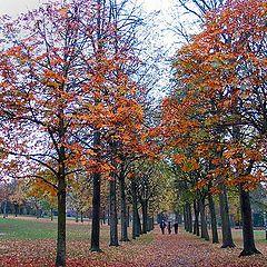 """фото """"Autumn colors#2"""""""