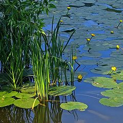 "photo ""Silent pond. Click on photo,  please))"""