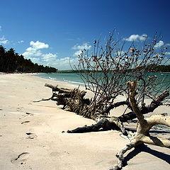 "photo ""Sand and Tree"""