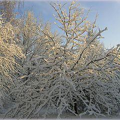 "фото ""Зимний сад"""